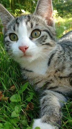 Rurouni Kenshin, Cute, Photography, Animals, Friends, Botany, Cats, Animales, Amigos