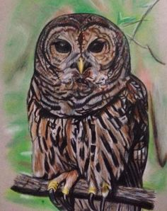 Barred Owl in Prismacolor pencil and pastels. This is the latest owl by Owl Pages contributing artist Tiffany Mootrey Art. See her other owls on our. Love Art, All Art, Owl Artwork, Barred Owl, Owl Pictures, Pebble Art, Archaeology, Pet Birds, Colored Pencils