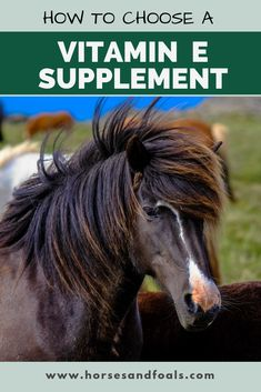Which Is The Best Vitamin E Supplement For Horses? Horse Care Tips, Horse Feed, Nutritional Supplements, Show Horses, Vitamins And Minerals, Horse Riding, Vitamin E, Immune System, Healthy Skin