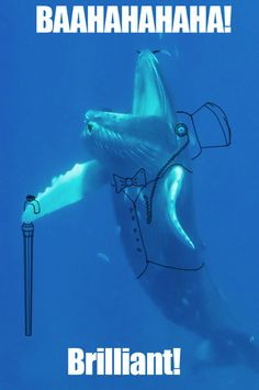 Whales, you always give us a laugh!