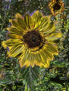 Digital Painting Series Sunflower Brilliant Cathy Anderson