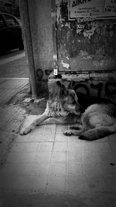 A dog, Athens