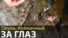 Окунь, пойманный за глаз   Беломорские приключения 2016   Приключения на...