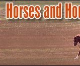 Types of Equine Breeds        Coldbloods - Larger, gentle horses for working or hauling.        Hotbloods - Swift, fast horses used for racing and speed.        Warmbloods - Great breed for equestrian sports and competitions.
