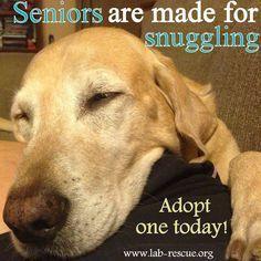 γιατί είναι οι μεγάλοι σε ηλικία σκύλοι;