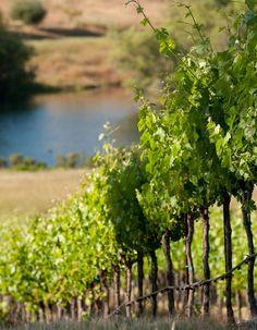 Jordan Wines, Cabernet Sauvignon from Sonoma County