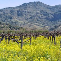 When to Go to Napa Valley