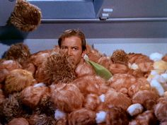 """Remember """"The Trouble With Tribbles"""" episode of Star Trek?"""