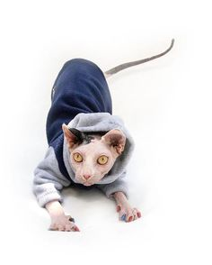 PurrWear Cat Clothing for Sphynx Hoodie Long Sleeve by PurrWear