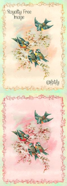 Bird Drawings: Royalty Free Image - Free Pretty Things For You