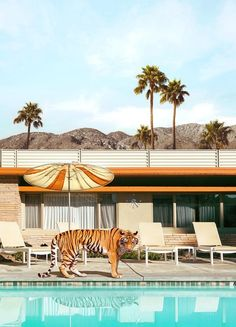 Palm Springs als Poster von Fuentes Photo Palm Springs, Spring Photography, Color Photography, Animal Art Projects, Art Prints Online, Modern Disney, Chula, Photo Wall Collage, Spring Art