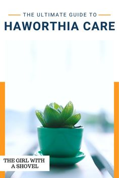 Don't let your Haworthia die! Follow these simple care tips to keep your zebra plant alive and well for years to come! Best Indoor Plants, Air Plants, House Plants Decor, Plant Decor, Zebra Plant, Apartment Plants, Propagating Succulents, Plant Guide, Succulent Care