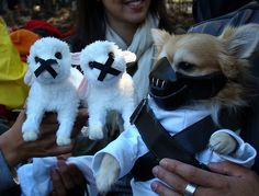 The 100 Silliest Pet Halloween Costumes