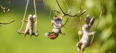 Transomnia rabbit on a swing