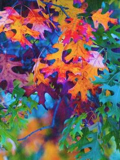 Autumnal Oak Leaves - great addition to my Rainbow Board. Colors Of The World, Art Et Illustration, Over The Rainbow, Autumn Leaves, Oak Leaves, Autumn Rain, Rainbow Colors, Bright Colors, Happy Colors