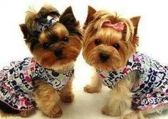 Aww,  too cute