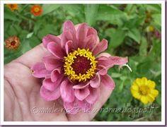 Le Ricette della Nonna: Foto dedicate alla Primavera per il contest PEMA: ...