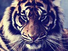 What is your animal? Take the quiz