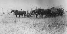 Hauling the hundred willows & centerpole for the Medicine Lodge 1935