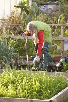 A Simple Guide On How To Grow Onions And Leeks