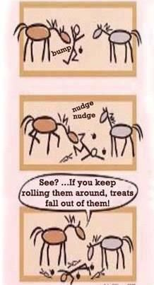 How horses get more treats-my favorite!! This is mo. Haha