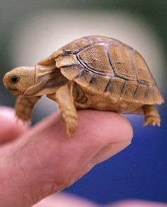 PET TURTLES. HOW TO CARE FOR A TURTLES AS PETS? - more at comicanimals.com