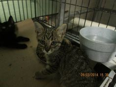 BINGO has been rescued by SUZY'S ZOO SANCTUARY! Shelters, Bingo, Cats, Gatos, Animal Shelters, Shelter, Cat, Kitty, Hiding Places