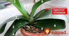 Chcete, aby vám orchidea z obchodu krásne kvitla co najdlhšie? Toto musíte vedieť!