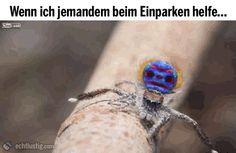 Video zeigt kleine Spinne,welche mit ihren Beinen winkt.Untertitel: So helfe ich jemanden beim Einparken