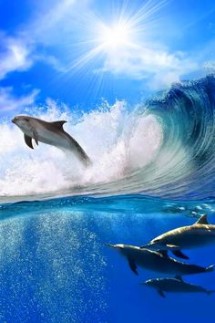 Dolphins are great magnificent and incredibly intelligent creatures. Dolphins need to be understood and respected. Happiness comes to me seeing Dolphins in the wild while I dive. Under The Water, Under The Sea, Orcas, Endangered Species, Fauna Marina, Especie Animal, Water Animals, Wale, Whales