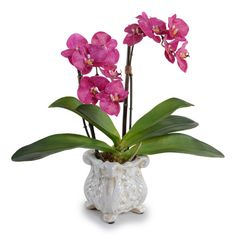 Found it at Wayfair - Fuchsia Double Faux Phalaenopsis Orchid in Pot