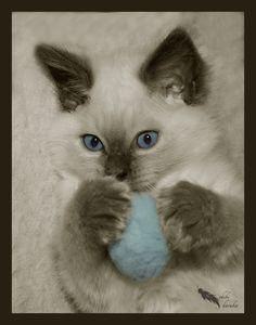 to be a kitten by *chibiharuka on deviantART