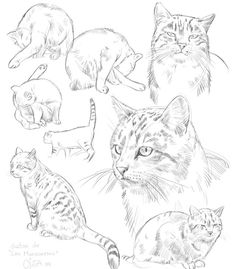 grind - cat - grind -cat - grind - 8 Animal Drawings Some fox studies. Drawing Wolves of Transylvania Animal Sketches, Animal Drawings, Art Sketches, Cat Drawing, Painting & Drawing, Cat Anatomy, Cat Sketch, Dragonfly Art, Warrior Cats
