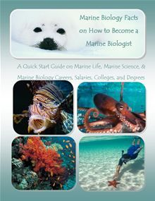 How To Become A Marine Biologist  What I Want To Do
