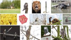 Visit and support my portfolio @Depositphotos #Stock #Photos #Images #Microstock #Animal #Bird #Wildlife https://depositphotos.com/portfolio-3669029.html?c1e83f1c414707fad9abd625390821d1