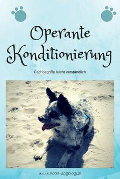 in meinem aktuellen Blogartikel erkläre ich dir, was operante Konditionierung ist und wie du sie im #Hundetraining einsetzt. Training Programs, All Dogs, Tricks, Dog Training, Chihuahua, Positive Verstärkung, Movie Posters, Dog Runs, Dog Training Tips