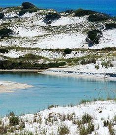 Floridian Nature: Floridian Nature Spot of the Week: Grayton Beach