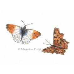 Butterflies painting   Vlinders illustratie door Marjolein Kruijt #butterflies #butterflyart #butterflypainting #vlinders #vlinderschilderij