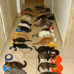 A lot of kitties!