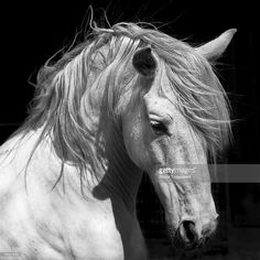 andalusian - Google Search