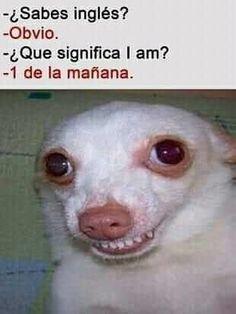 Best Memes, Dankest Memes, Funny Memes, Funny Animal Photos, Funny Animals, Funny Instagram Memes, Funny Spanish Memes, Humor Mexicano, Otaku Meme