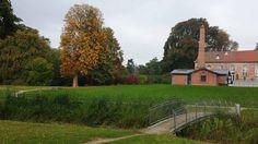 Bilder von einer Malreise auf der Insel Rügen   Herbstliches Motiv im Park von Putbus (c) Frank Koebsch