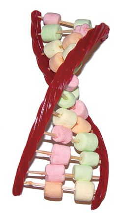 make an edible DNA model