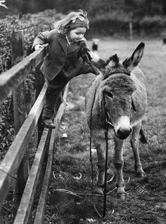 mamitah: videre-licet: ibustmine-tokickyours: Pictures like this make me really happy. Me too :) Inside every big horse girl is a little horse girl with one foot on a fence rail come closer, little donkey… Animals For Kids, Animals And Pets, Cute Animals, Tanz Poster, Big Horses, Tier Fotos, Horse Girl, Vintage Photographs, Belle Photo