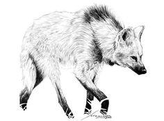 lobo guara desenho cientificos - Pesquisa Google