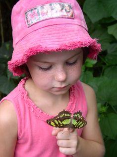 Schmetterlingshaus Insel Minau Duitsland augustus 2006