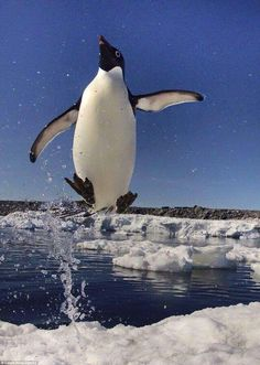 *Happy feet