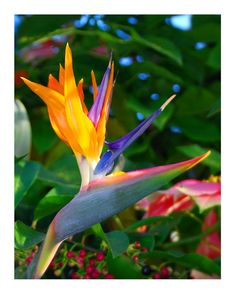 Bird of Paradise Flower Photo 8x10 US by LuvinEveryMinute on Etsy, $10.00