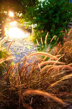 Isn't this a lovely photo of the sun peeping through the seagrass at the beach in beautiful Naples, Florida? If you're looking to get a little sand between your toes, please call us today. We would love to help you find a home in the sunshine! 239.370.0574