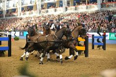 """Receive wonderful suggestions on """"Horse Show"""". They are actually offered for you on our internet site. Olympia Horse Show, Receiver Hitch, Used Boats, Show Horses, Equestrian, Internet, Travel, Animals, Website"""
